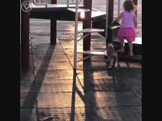 Смотри как надо. Малышка учит щенка кататься с горки
