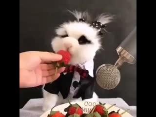 ASMR от кролика