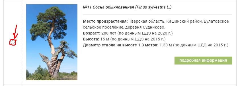 Победа зависит от нас: Сосна из Тверской области участвует в национальном конкурсе