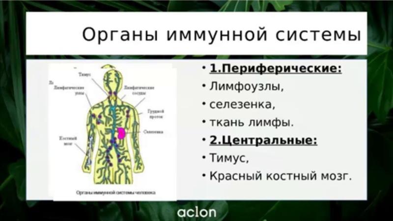 ИММУНИТЕТ И Биорегуляторы виоргоны и виофтаны, защитим себя от простуды. Врач Севостьянова Т.И.