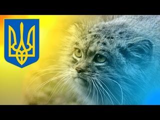 Manul: Ukrainian Extended Edition