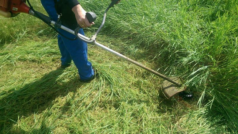 В Таганроге в праздничные дни косили траву