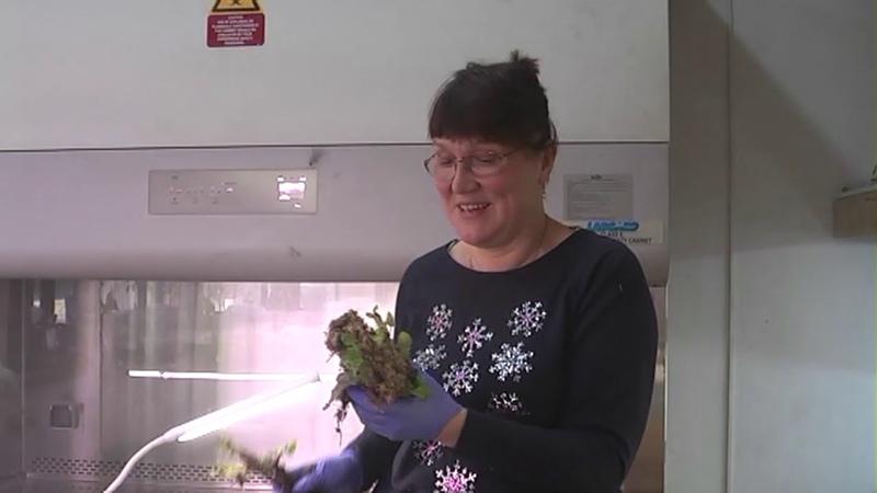Как укоренились растения методом буррито
