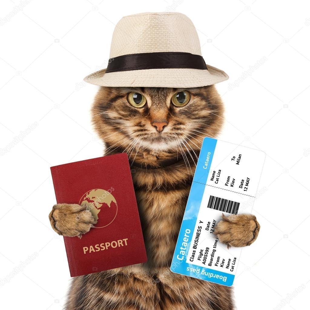 Прикольные поздравления с получением паспорта в картинках, картинка для презентации