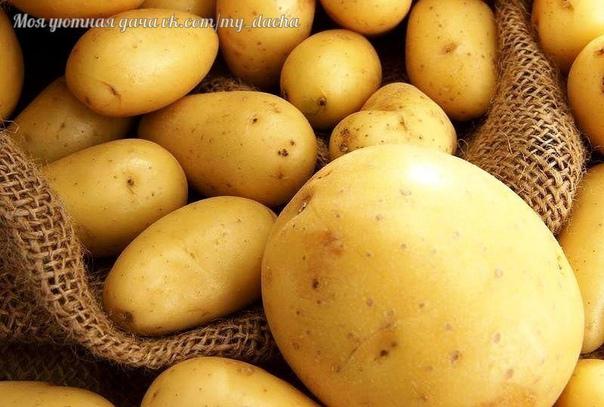 10 правил получения раннего картофеля