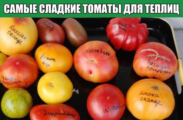 Самые сладкие томаты для теплиц
