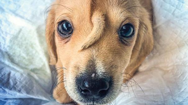 Хозяева бросили щенка из-за того что у него изо лба торчит хвостик. В конце 2019 года сотрудники организации для животных патрулировали улицы и увидели двух собак. Один пес был постарше, а