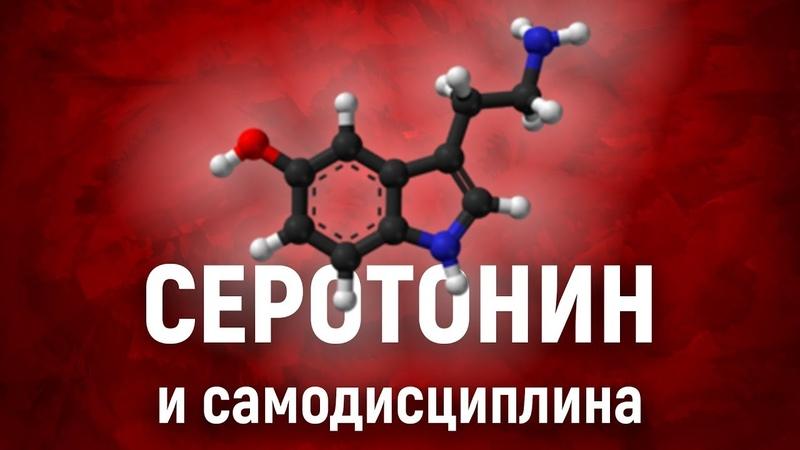 Как серотонин влияет на САМОДИСЦИПЛИНУ Химия силы воли