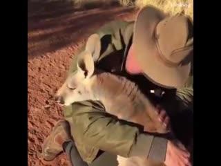 Любовь, Между Людьми и Животными