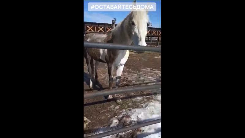 Когда устал быть блондинкой🐎🐎🐎 кстати так лошади как и большинство животных чешутся😬😬😬 и как на зло обычно когда помоешь🤠