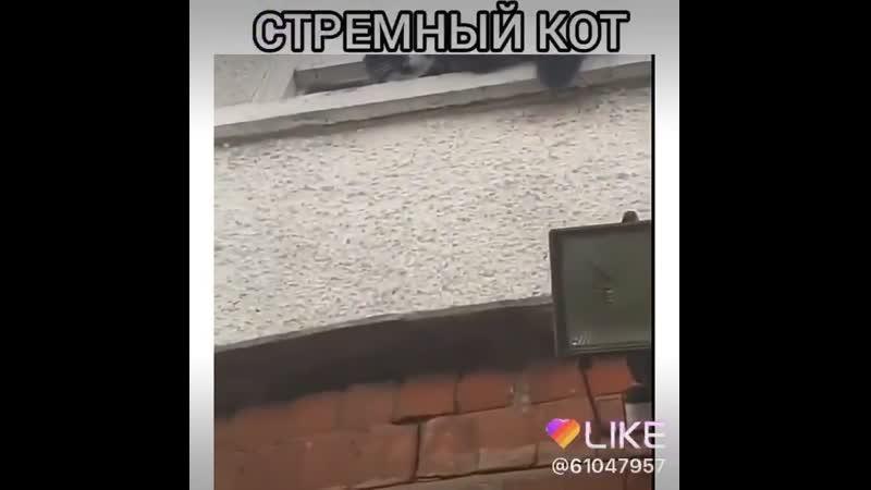 Котяра Блять))