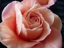 Как я леплю Розу из Холодного Фарфора Rose in orange Cool MK Porcelain from Rita