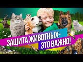 Как в России заботятся о животных