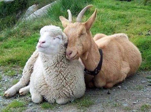 Даже если вы чертовски разные - это не повод не любить друг друга...