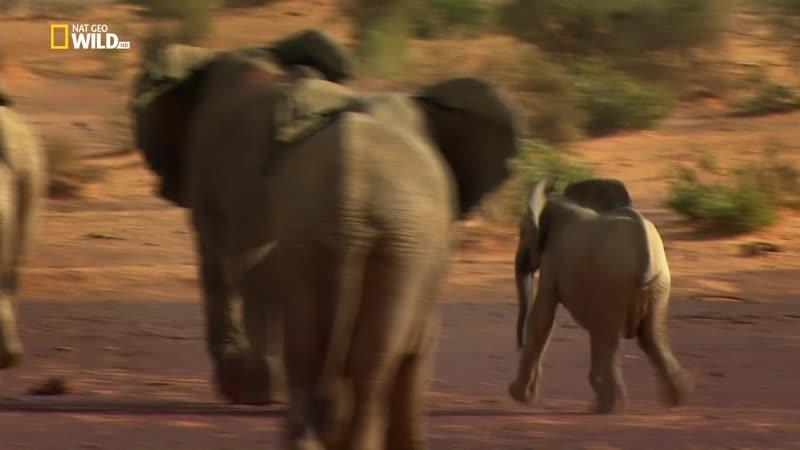 Почти человек Жизнь слона An Elephant's World