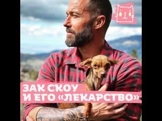 Зак Скоу и его собачье лекарство от всех болезней