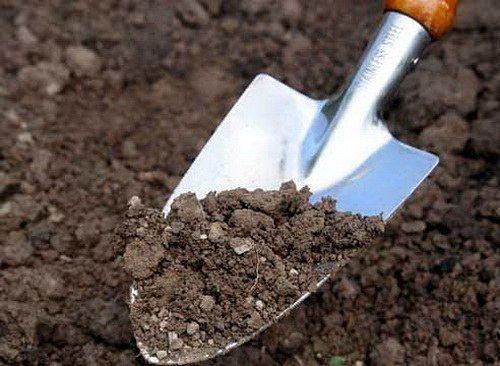 Как не пересолить почву. Важный момент Мы не раз писали о том, что соль (в разумных количествах) очень даже полезна в саду и огороде. Например, ею поливают молодые посадки свеклы, чтобы