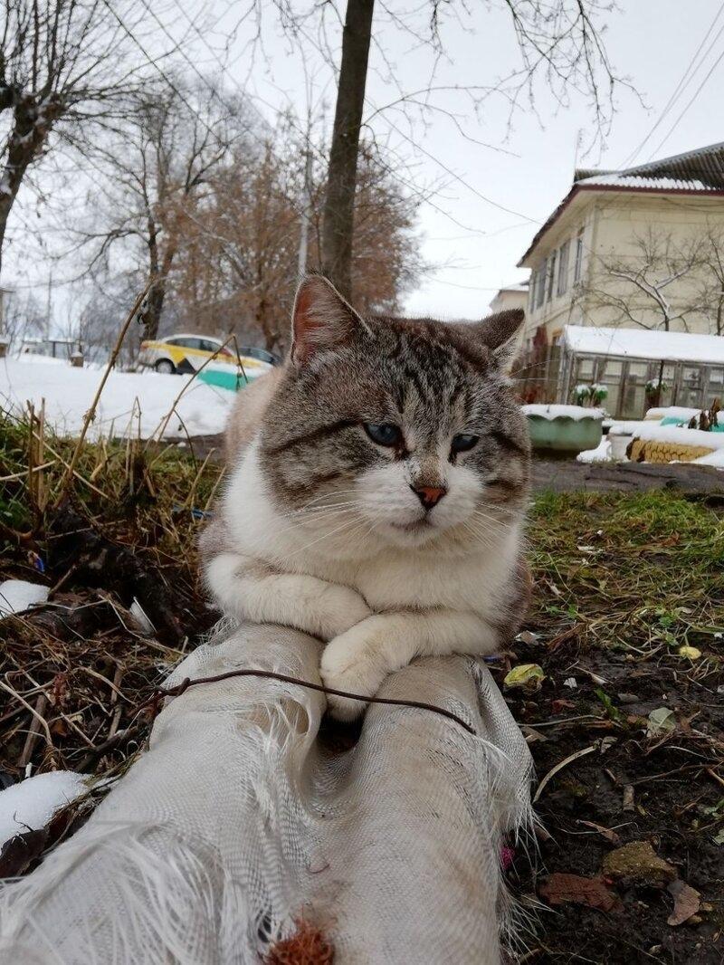 А сегодня нам очень интересно узнать, какой вы сегодня котик: