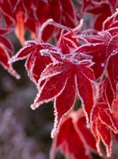 Восхитительная встреча осени с зимой Доброе утро!
