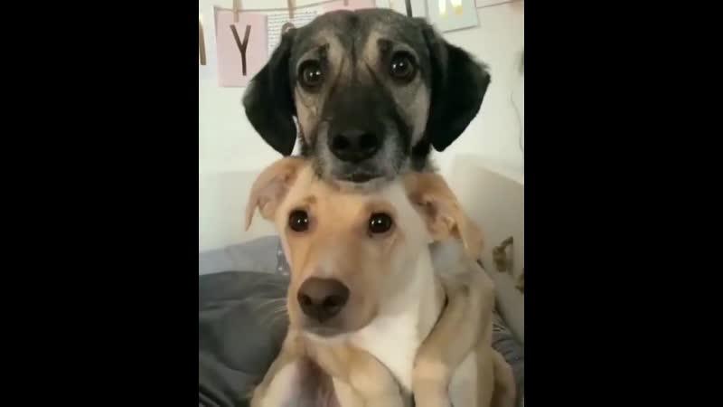 Фотографируются | Собака - Друг человека | Собаки | ВКонтакте