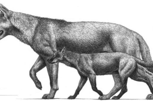 giant animals north america - 1001×592