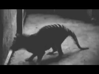 Редкое видео шести вымерших животных
