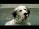 х/ф БЕЛЫЙ БИМ ЧЕРНОЕ УХО (1977) | 2018 - год собаки