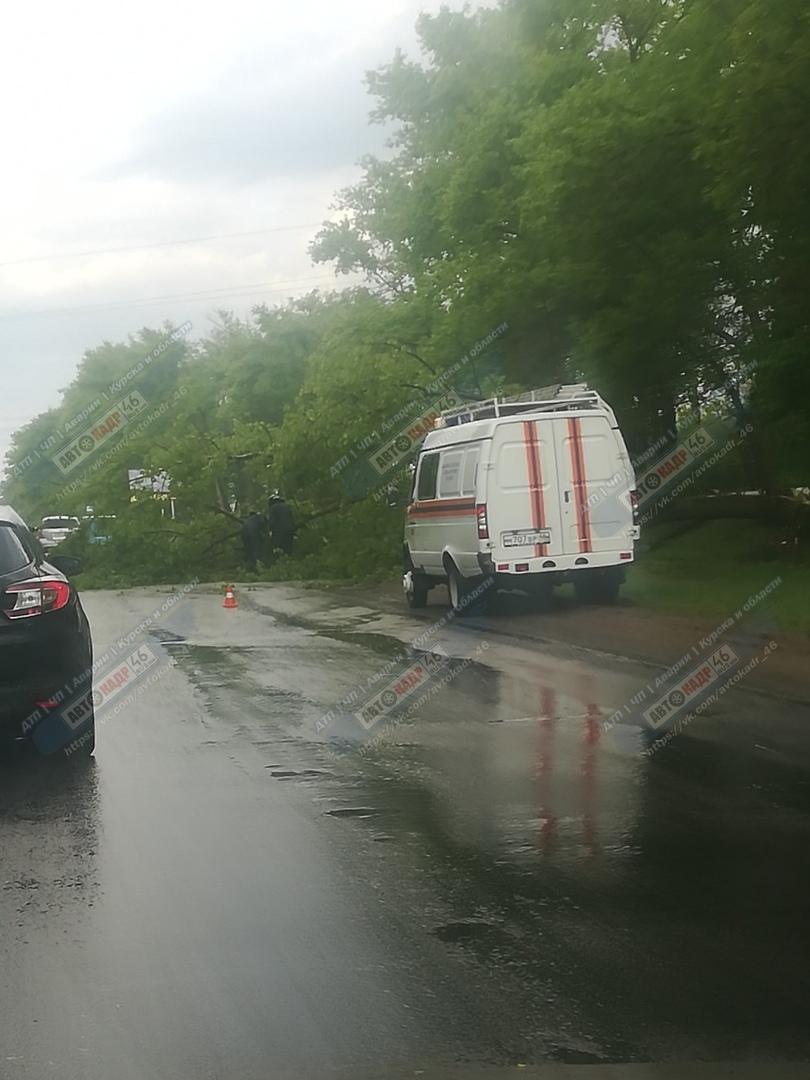 Дождь в Курске: поваленные деревья мешают автомобилистам, из люков хлещет вода