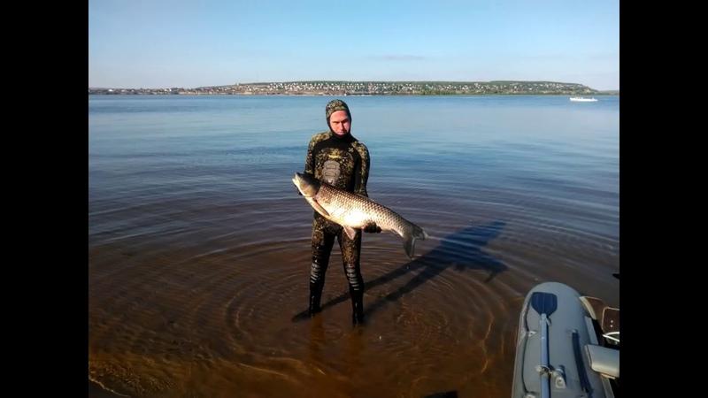 Подводная охота на Белого Амура Волга 22.09.2018 ( Саратов)