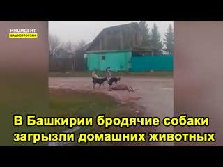 В  Башкирии собаки загрызли домашних животных