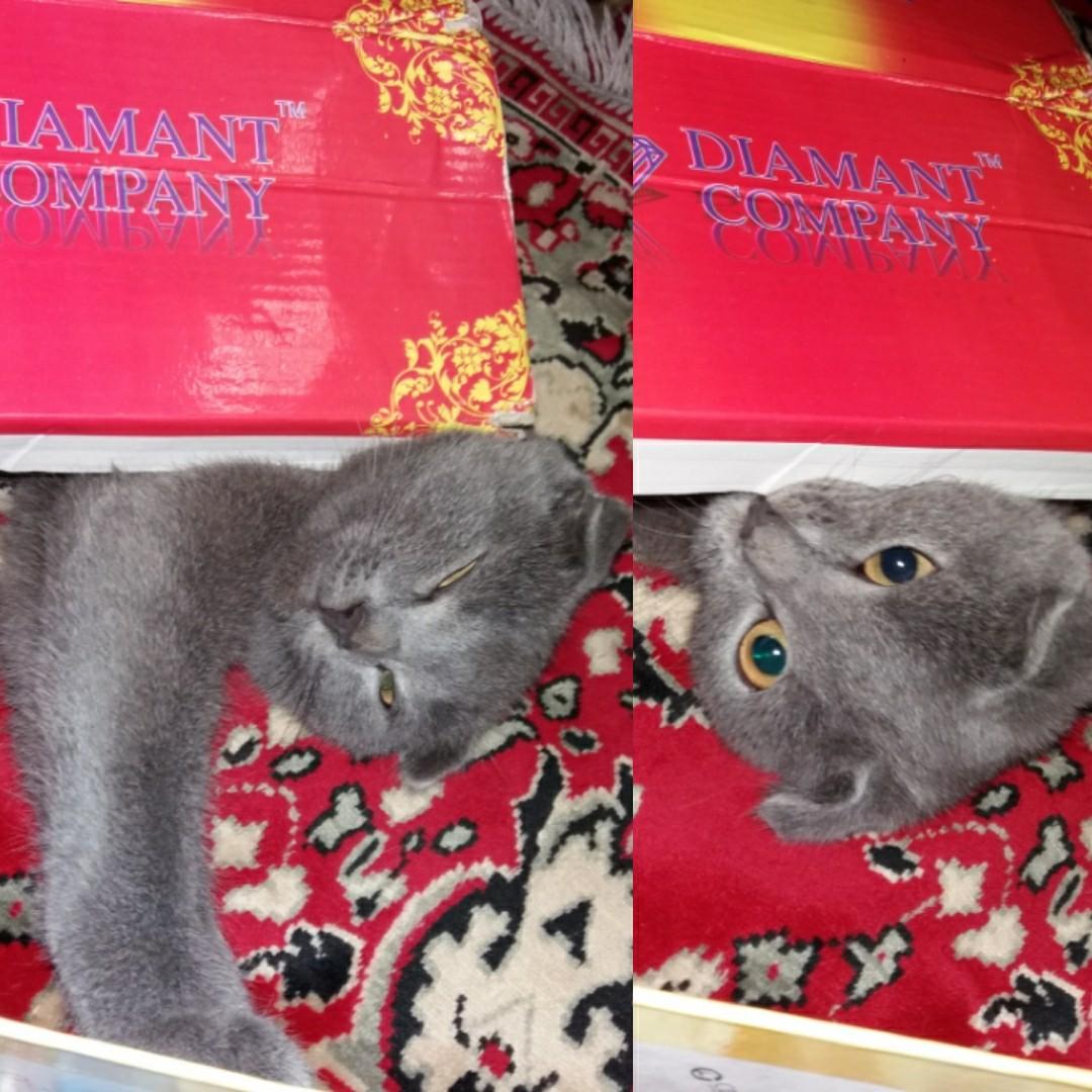 Любитель коробок))