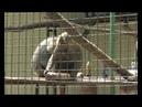 Зоомороженое и водные процедуры: как животные в Экопарке спасаются от жары 29.07.19