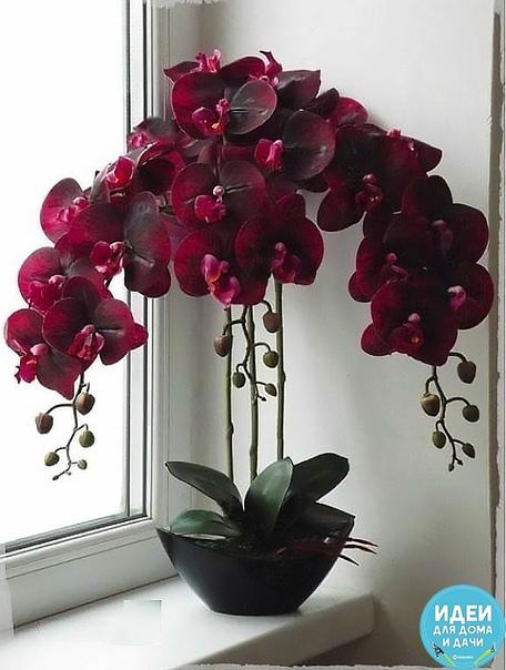 Перекись водорода  лучшее удобрение для орхидей