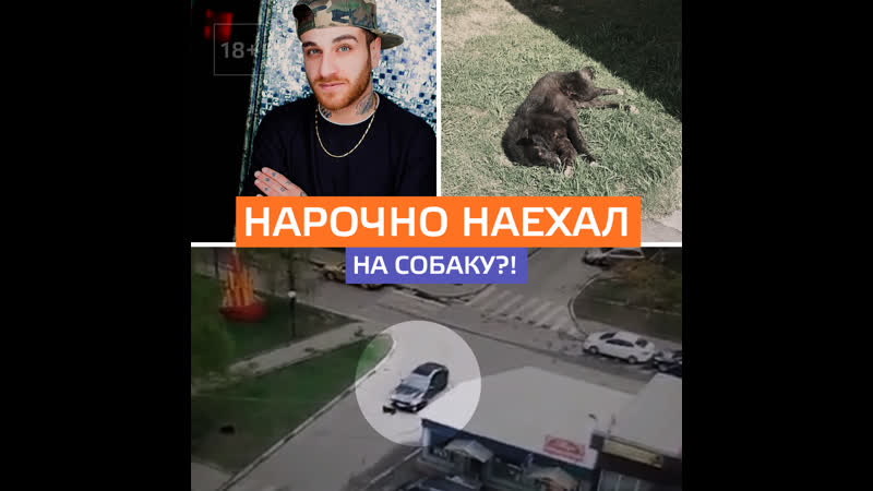 В Подмосковье водитель наехал на спящего пса — Москва 24