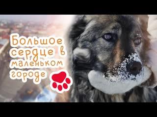 Документальный фильм про бездомных животных | Большое сердце в маленьком городе | HD | 2020