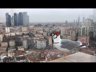 Чайка прыгает с крыши МЕМ Все зависит от винта COUB