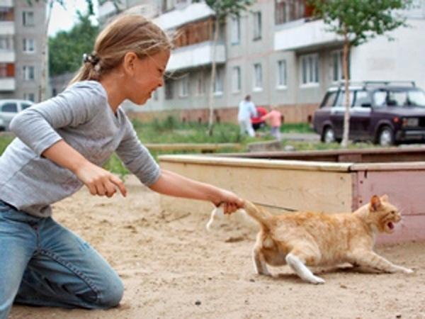 В Башкирии живодеры заживо сняли шкуру с кошки В Стерлитамаке рядом с торгово-развлекательным центром «Арбат» горожане обнаружили страшную находку. Мертвая кошка лежала на асфальте, живодеры