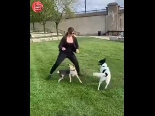 Какая работа с собаками за 13 секунд!! ))