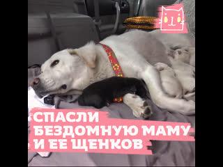 Спасли бездомную собаку с 7 щенками с помощью вкусняшек