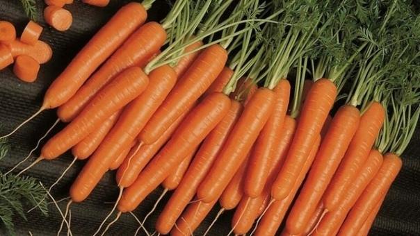 Какие сорта моркови я сею под зиму и уже в июне месяце употребляю в свежем виде