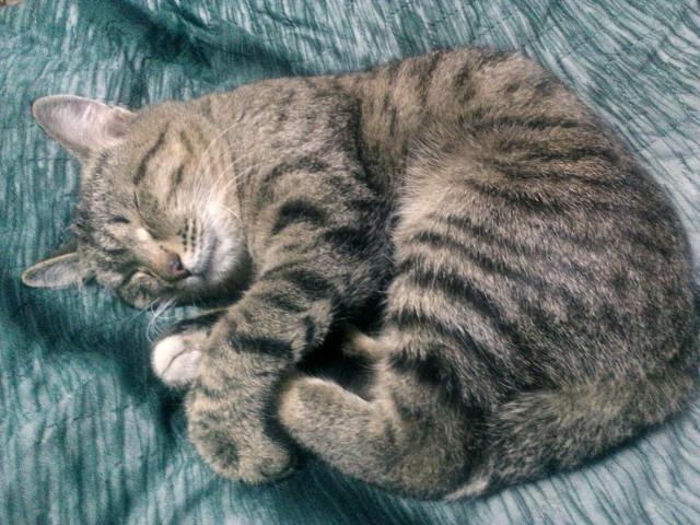 Ваша кошка храпит во сне?