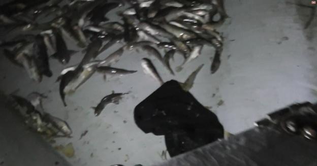Под Таганрогом браконьеру вынесли приговор и назначили штраф в размере 400 тыс.рублей