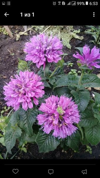 Доброго времени суток, подскажите как называется этот цветок