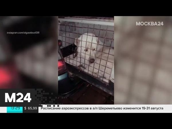 Водитель привязал алабая к машине на Киевском шоссе Москва 24