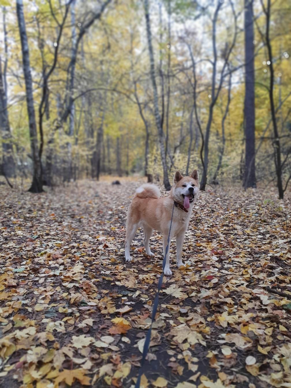 Добрый день, всем! Пропала собака в Малаховке.