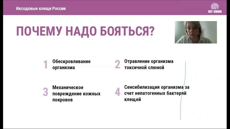 Иксодовые клещи России. Трансмиссивные заболевания собак и кошек.