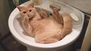 КОТЫ 2019 Смешные коты приколы про котов до слез – ЗАБАВНЫЕ кошки 2019 – Funny Cats