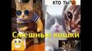 Смешные коты смешные видео смех до слез приколы года канал НастроэШн сборник №9