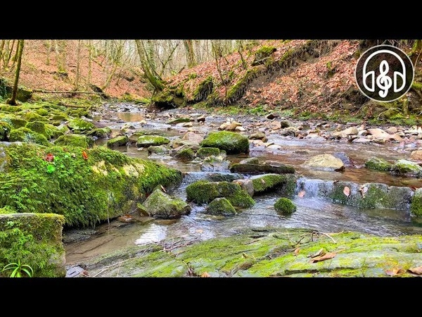 Gentle Sound Of A Mountain River Video 4K 12 Hours for Deep Sleep Study