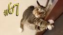 ПРИКОЛЫ С ЖИВОТНЫМИ 😺🐶 Смешные Животные Собаки Смешные Коты Приколы с котами Забавные Животные 67